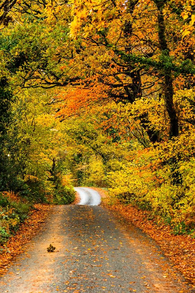 Autumn Colours by Stuart Bailey Media