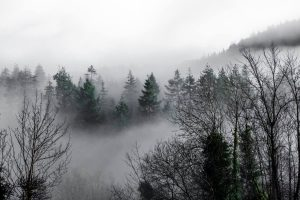 Mist in the Valley by Stuart Bailey Media
